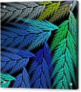 Colorful Feather Fern - Abstract - Fractal Art - Square - 3 Ll Acrylic Print
