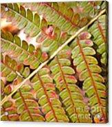 Colorful Fern Square Acrylic Print