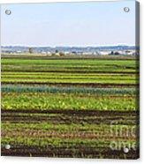 Colorful Fields Acrylic Print