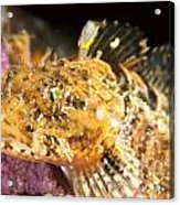Colorful Fish Acrylic Print