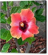 Colorful Flower Acrylic Print