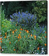 Colorful Flowers Along The Trail Acrylic Print