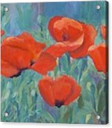 Colorful Flowers Red Poppies Beautiful Floral Art Acrylic Print