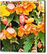 Colorful Flowers Acrylic Print by Tom Gowanlock