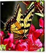 Colorful Flying Garden Acrylic Print