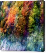 Colorful Forest Acrylic Print