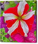 Colorful Garden Flower Acrylic Print