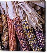 Colorful Indian Corn Acrylic Print