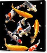 Colorful Japanese Koi Vertical Acrylic Print