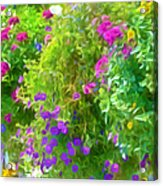 Colorful Large Hanging Flower Plants 3 Acrylic Print