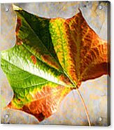 Colorful Leaf On The Ground Acrylic Print
