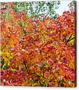 Colorful Leaves In Autumn Acrylic Print