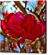 Colorful Magnolia Blossom Acrylic Print