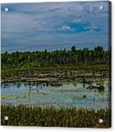 Colorful Marsh Acrylic Print by Jason Brow