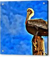 Colorful Pelican Acrylic Print