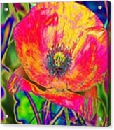 Colorful Poppy Acrylic Print