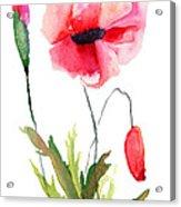 Colorful Poppy Flowers Acrylic Print