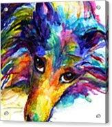 Colorful Sheltie Dog Portrait Acrylic Print