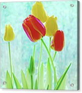 Colorful Spring Tulip Flowers Acrylic Print