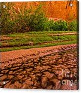 Colorful Streambed - Coyote Gulch - Utah Acrylic Print