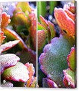 Colorful Succulents In Stereo Acrylic Print