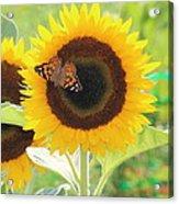 Colorful Sunflower Acrylic Print