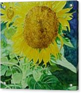 Colorful Sunflowers Watercolor Original Sunflower Art Acrylic Print