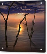 Colorful Sunset Seascape With Tree Trunks Acrylic Print