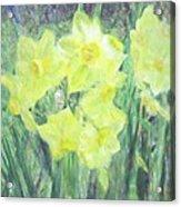 Colorful  Yellow Flowers Acrylic Print