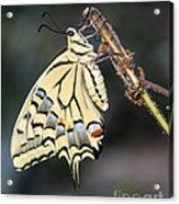 Colorfull Profile Acrylic Print