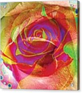 Colorfull Rose Acrylic Print