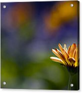 Colorfully Soft Acrylic Print