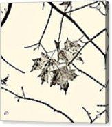 Colorless Autumn Acrylic Print