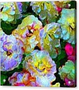 Colors And Roses Acrylic Print