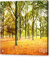 Colors Cool Acrylic Print by Boon Mee
