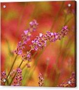 Colors I Love Acrylic Print