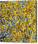 Colors Of Autumn - Yellow - Featured 3 Acrylic Print