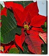 Colors Of Christmas Acrylic Print