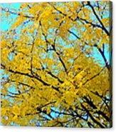 Colors Of Fall 1 Acrylic Print