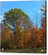Colors Of Fall 1 Acrylic Print