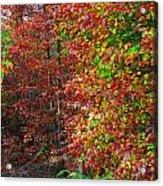 Colors Of Fall 4 Acrylic Print