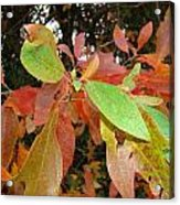 Colors Of Fall Acrylic Print