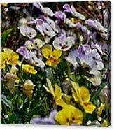 Colors Of Flower  Acrylic Print