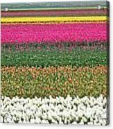 Colors Of Holland Acrylic Print by Lars Ruecker