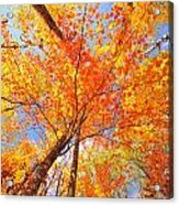 Colors Of Leaves Yellows Oranges 2884 Acrylic Print