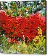 Colors Of Life Acrylic Print