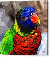Colors Of The Lorikeet Acrylic Print