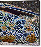 Colourful Crab Acrylic Print
