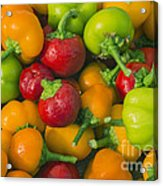 Colourful Mini Bell Peppers Acrylic Print