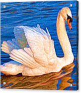Colourful Swan Acrylic Print